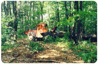 Skidder removing timber from woodland